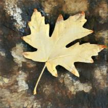 leaves16_11