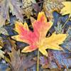 leaves16_14