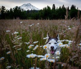 flowers-Alaska