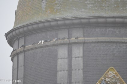 Taken from one of the upper levels of the tower, I felt these pigeons' pain.