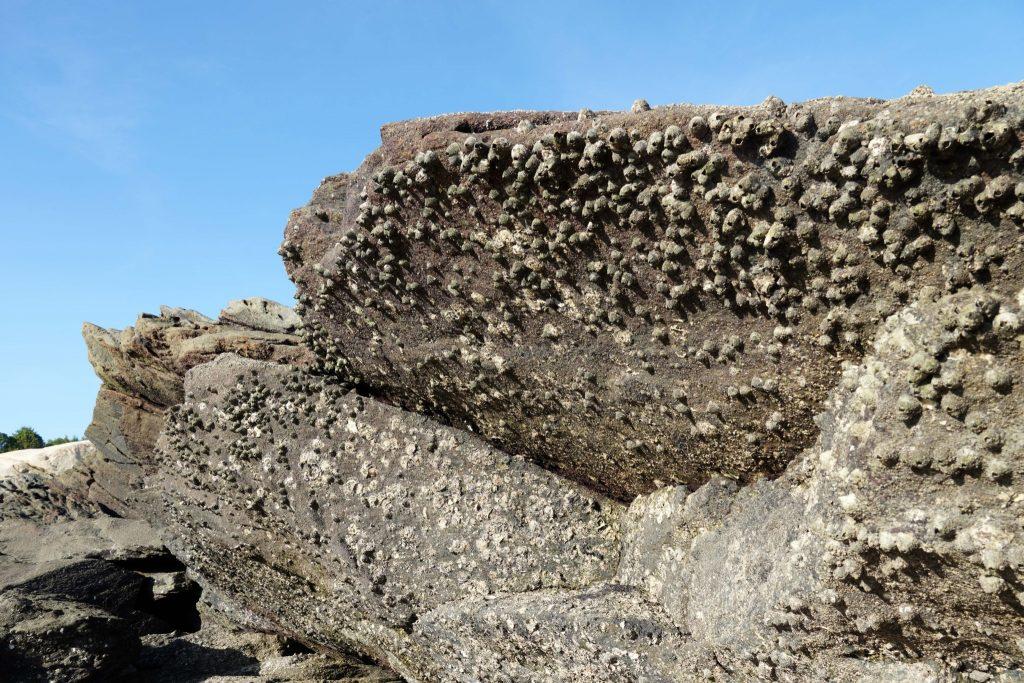 岩石上的藤壺  A6400 + E18-135 mm  18mm端 1/320  f6.3  iso 100 攝於金門