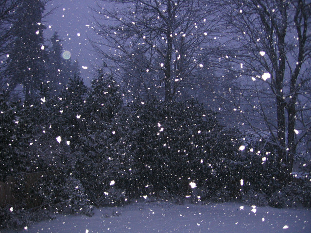 Free Animated Snow Falling Wallpaper Falling Snow