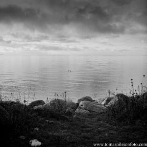 Tomas Nilsson - November 20