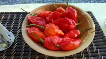 ghost peppers from Red Roots Farm