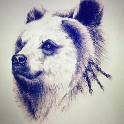 wildlife-bear-02
