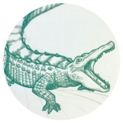 wildlife-croco-img-1
