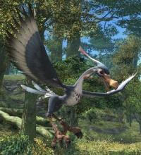 Arbor Buzzard Final Fantasy XIV A Realm Reborn Wiki