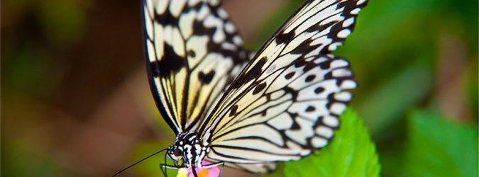 butterfly butterflies clipart fg