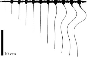 Time-lapse photography of a piano wire extruded at constant velocity in corn syrup.