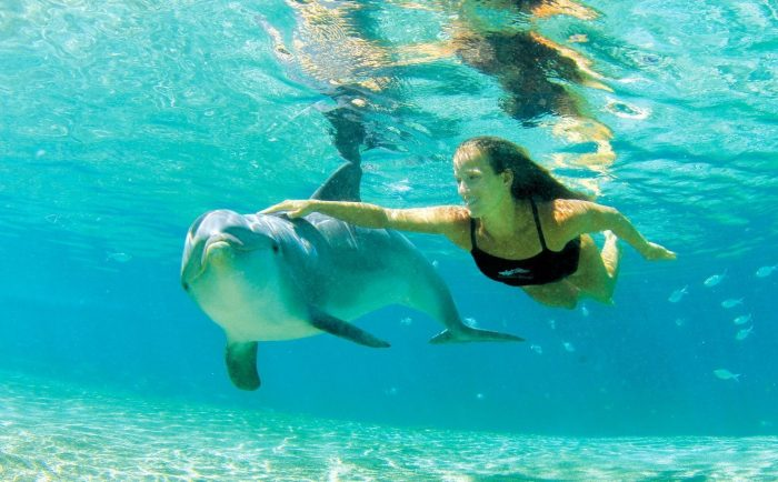 dolphin quest swim with