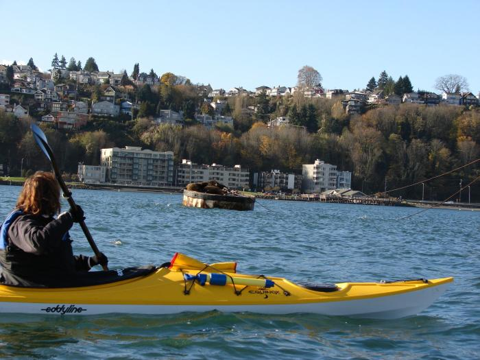 Kayak For Sale Craigslist Seattle – Kayak Explorer