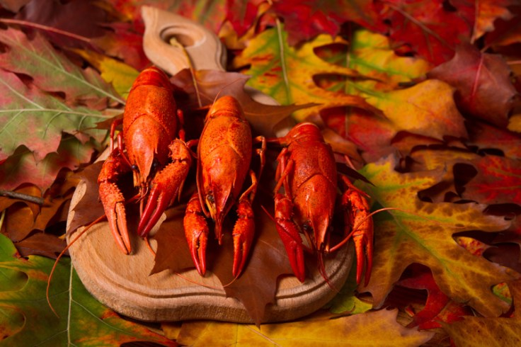 crawdads/lobster at thanksgiving