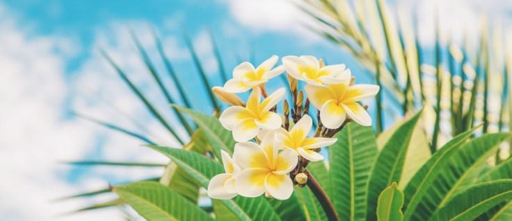 a tropical flower.