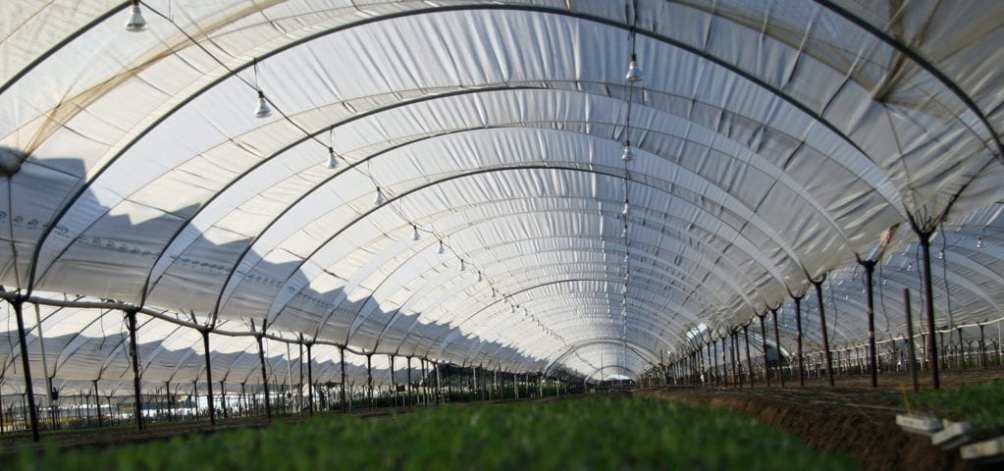 View from the ground inside of a greenhouse built for basic flower production.