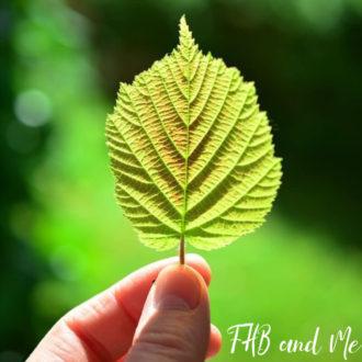 merry leaf (1)