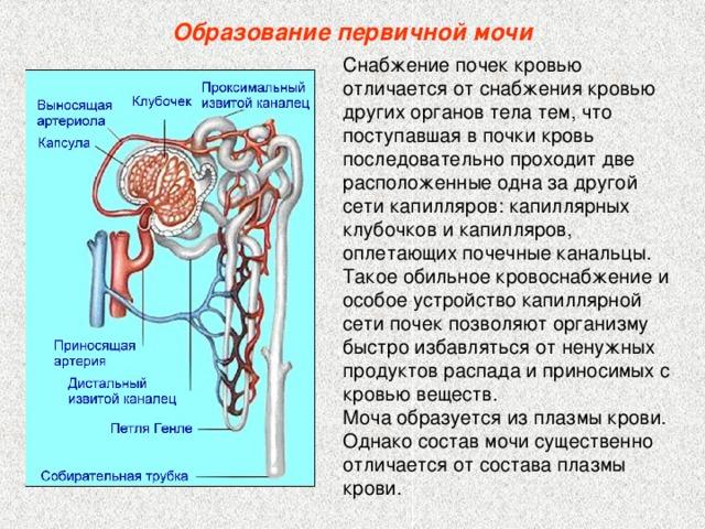 A vizelet vérében a vér vérrel történik)
