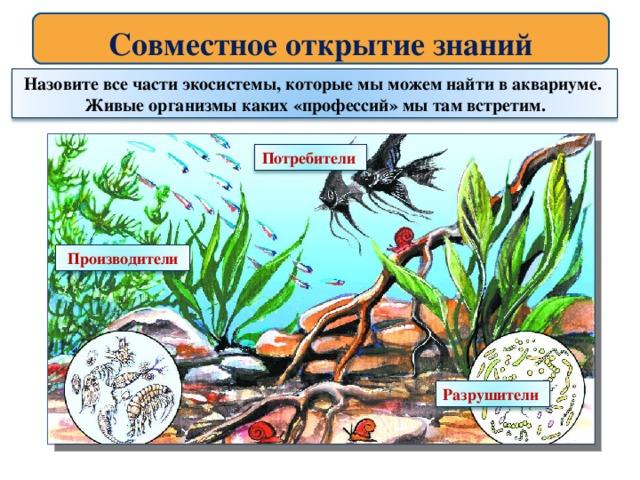 Лабораторная работа по биологии аквариум как девушка модель экосистемы работа веб моделью для девушек сайт