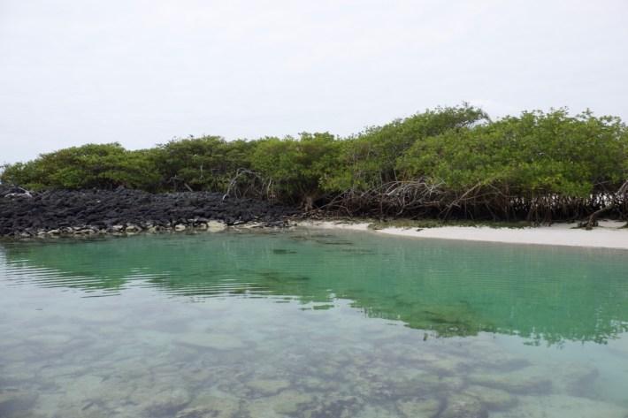 Santa Cruz - Tortuga Bay