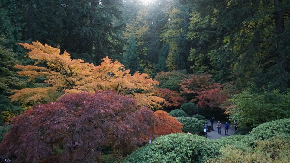 Photo of autumn color seen from the Bonsai Terrace at Portland Japanese Garden.