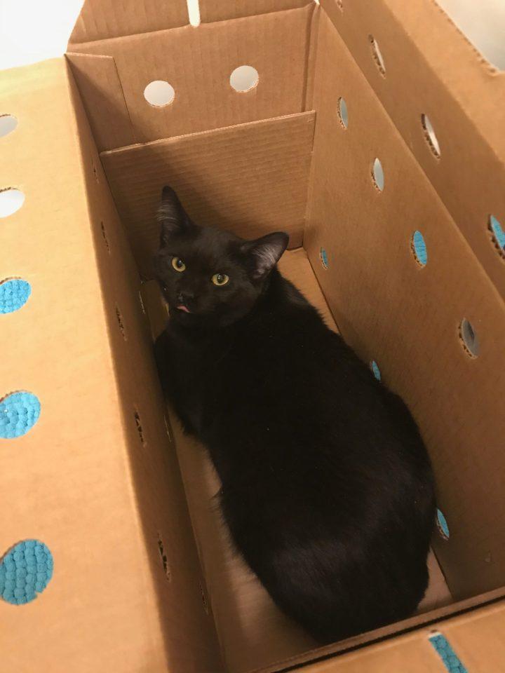 Photo of a black cat in a box.