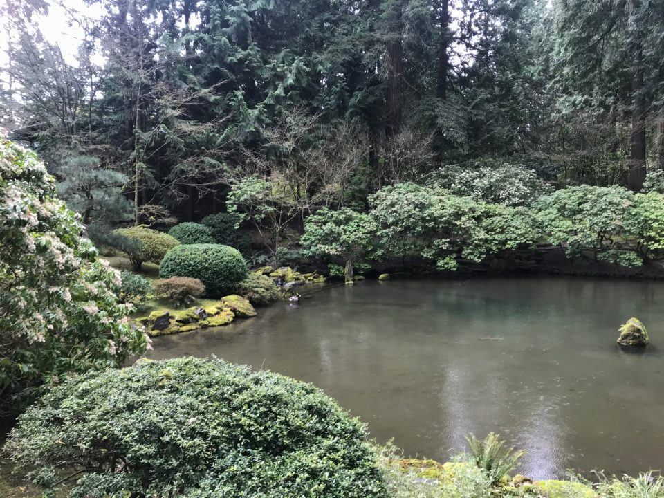 Photo of a pond at Portland Japanese Garden with two ducks swimming.