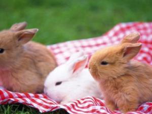 ماذا يسمى ابن الأرنب