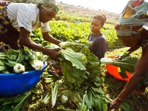 تقرير عن التنمية الزراعية في الوطن العربي