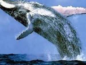 تفسير حلم ابتلاع الحوت للبشر في البحر