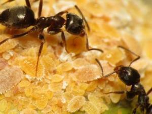 تفسير مواضع النمل في المنام لإبن سيرين