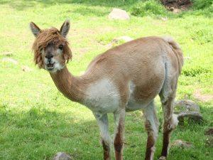 اسم حيوان بحرف اللام
