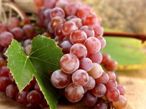 فوائد بذور العنب الاحمر لجسم الانسان