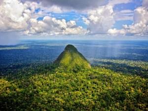 موضوع تعبير عن غابات الامازون مختصر بالفقرات