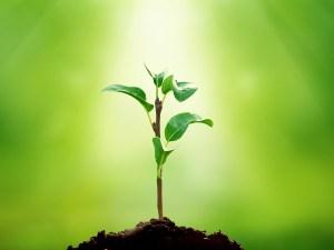 قارن بين خصائص النباتات الوعائية ولا وعائية
