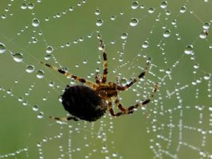 وضح لماذا لا يعد العنكبوت والقراد من الحشرات