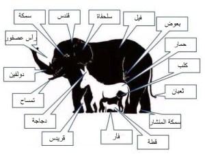 حل لغز كم عدد الحيوانات في الصورة