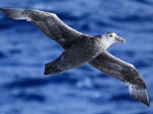 من التكيفات التي تساعد الطيور على الطيران