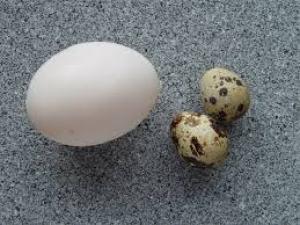 ما اهمية المح الموجود في بيض الطيور