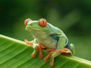أي المخلوقات الحية تستخدم الخياشيم والجلد في تنفسها؟