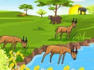 ماذا يحدث عندما تتغير الأنظمة البيئية