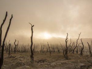 عند حدوث الجفاف في منطقة ما فإن ذلك يؤثر على الحيوانات والنبات ب