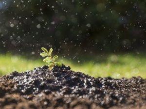 من العوامل المؤثرة في تكوين التربة