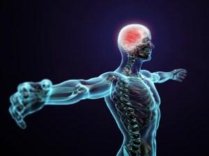 الجهاز المكون من الدماغ والحبل الشوكي هو الجهاز العصبي الطرفي
