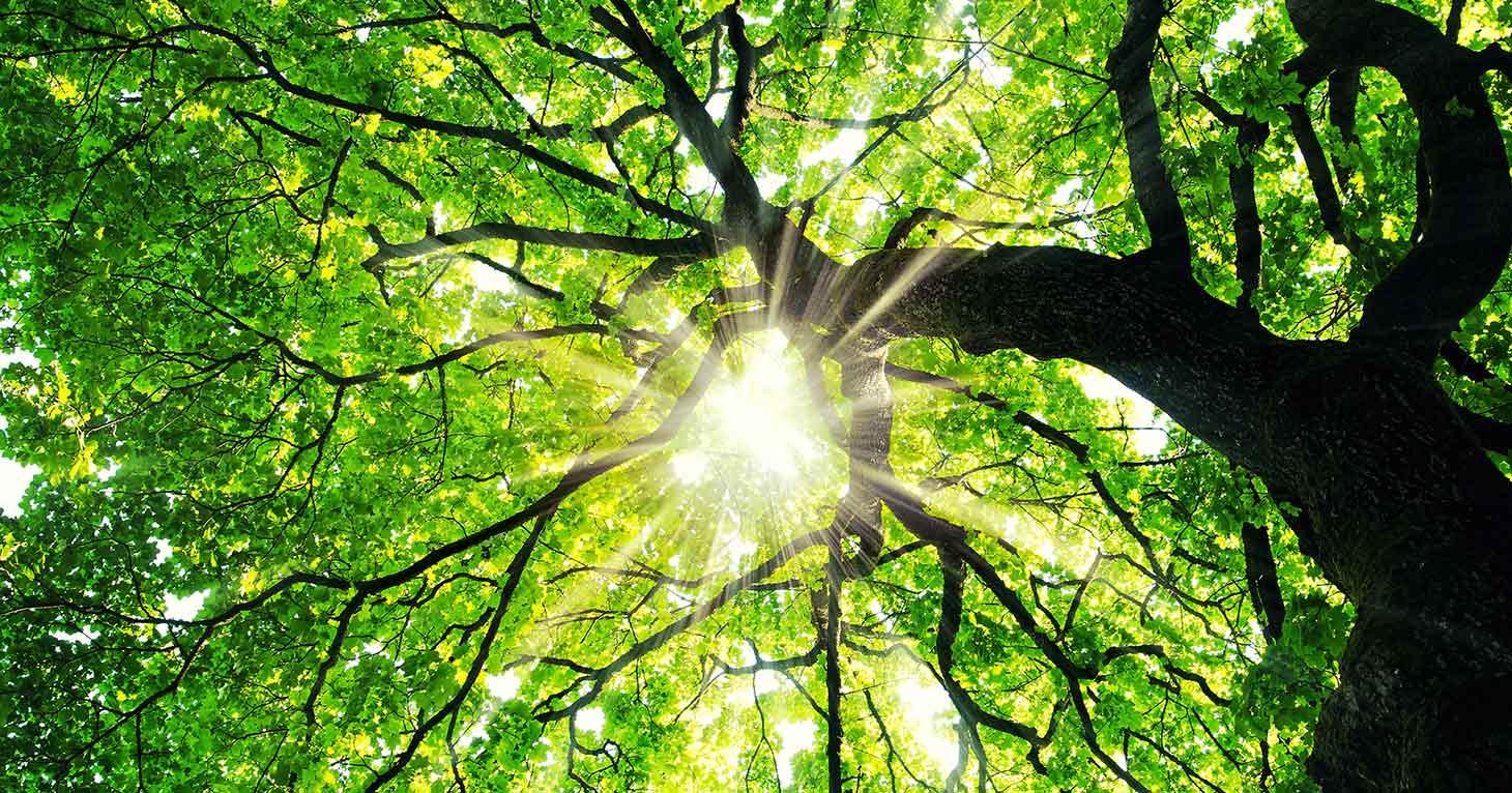 المتممات للجملة كالفروع للشجرة تختلف بأشكالها وتتفق بارتباطها.