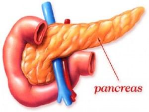 كثرة السكريات تؤثر على عضو في جسم الأنسان هو