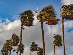 الرياح العالمية تهب فوق مساحات كبيرة