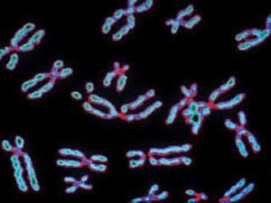 كم عدد الكروموسومات الموجودة في الخلية الجسمية للإنسان؟