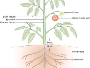 يحدث التنفس الخلوي داخل الفجوات.