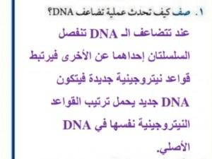 يسمى اي انحراف ينتج خلال عملية تضاعف dna