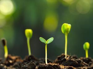 تحتوي طبقة البشرة في النبات على فتحات صغيرة تسمى