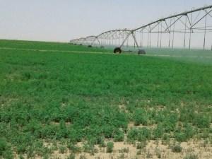 قامت الدولة بتقديم القروض الميسرة للمزارعين بدون فوائد
